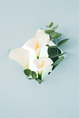 bouquet of white callas and eucalyptus in  frame on blue background