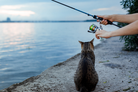 cat and fisherman with fishing rod wheel Stock fotó