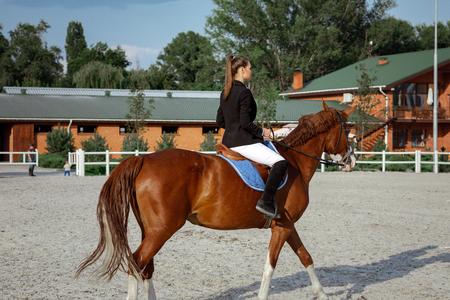 Reiter elegante Frau, die ihr Pferd draußen reitet Standard-Bild