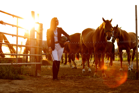rider woman with whip at the sunset Foto de archivo