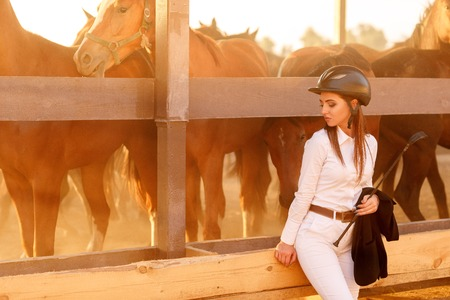 beautiful rider woman in helmet with whip near horses at sunset. horses in the paddock
