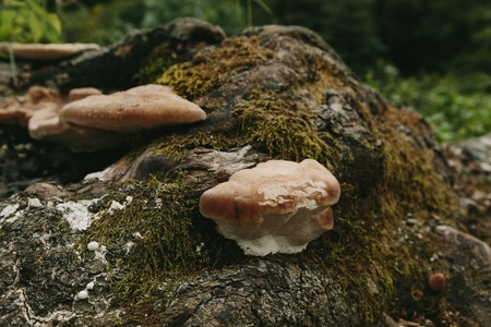 mushrooms and moss in the forest in summer Stock Photo