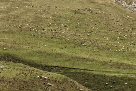 herd of sheep grazing on green meadows in the mountains of the Caucasus 写真素材
