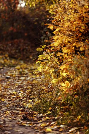 Landscape in autumn in the park. Golden autumn with yelow leaves