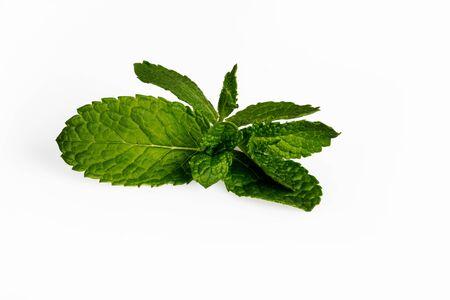 Fresh mint leaves isolated on white background. Stockfoto