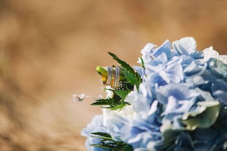 gold wedding rings on bouquet with beautiful hydrangea. copy space Stok Fotoğraf