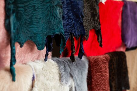 different types of multicolored fur skins. Warehouse of fur.