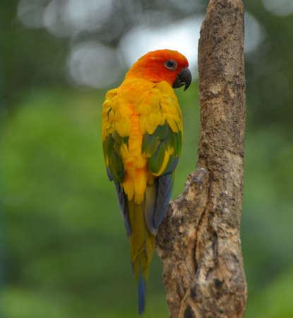 colorfull: colorfull rainbow bird