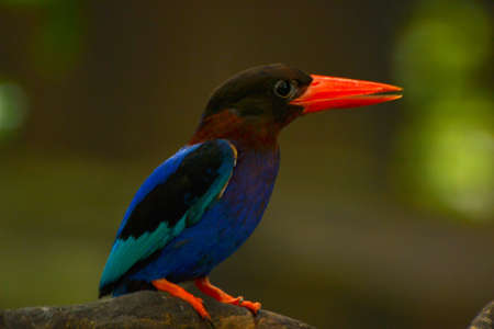 kingfisher: kingfisher