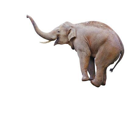 Elefant balanciert auf Objekt, isoliert auf weiß
