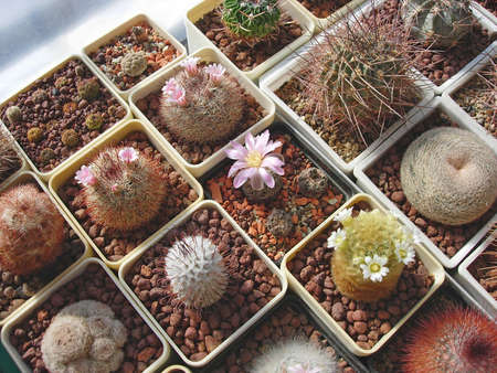 Large collection of different cactus species cultivated in the balcony. Stok Fotoğraf