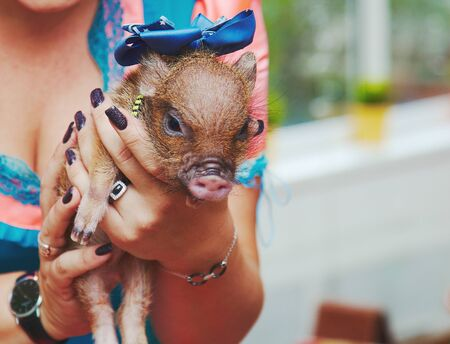 Kids touching small newborn babies of mini pig