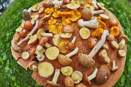 Wooden platter of mixed forest mushrooms mostly suillus, leccinum and chanterelle