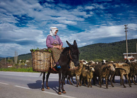Izmir/Turkey - April 25 2018: Very old woman in willage working as shepherd with her sheeps riding donkey