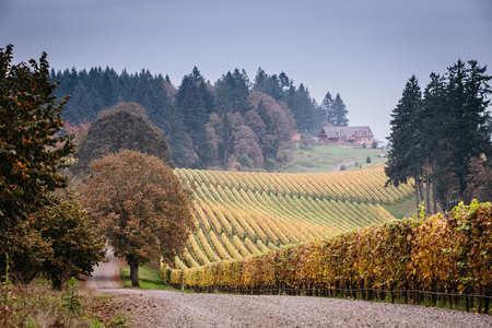 wine road: Vineyards during fall in Oregon