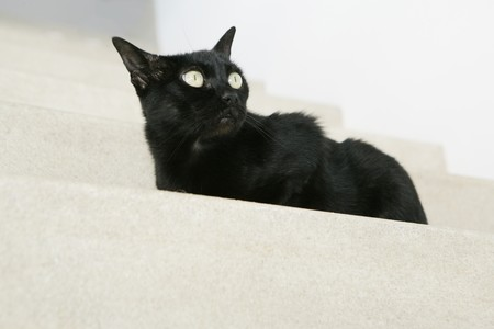 Black cat on stairs watching