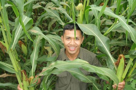 farm owner showing his high quality corn Stock Photo - 3892135