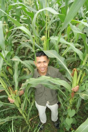 farm owner showing his high quality corn photo
