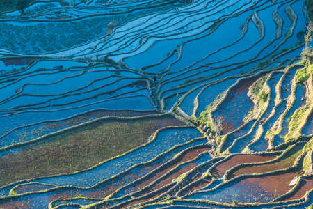 the magnificent: Yuanyang Duoyi tree Rice Terraces