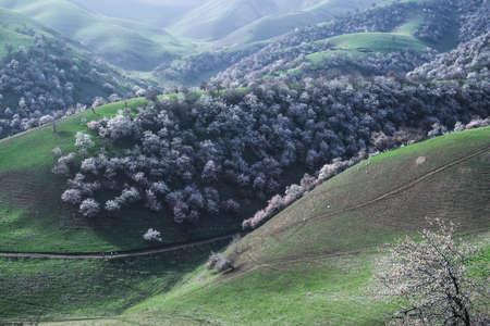 Yili apricot ditch scenery Stock fotó - 82896000