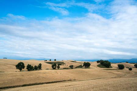 Wheat field in Tianshan Mountains