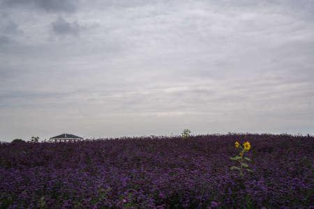 Jinchang Flower City Фото со стока