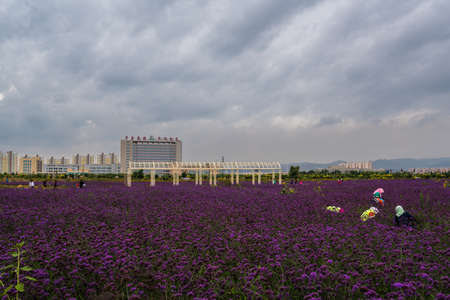 Jinchang Flower City Редакционное