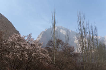 Apricot flower in the deep Kunlun Mountains