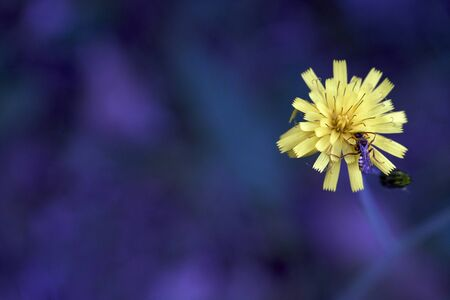 yellow flower on a purple background