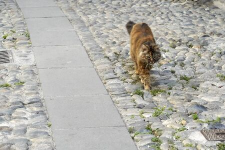 A stray cat walks along a stone road Imagens