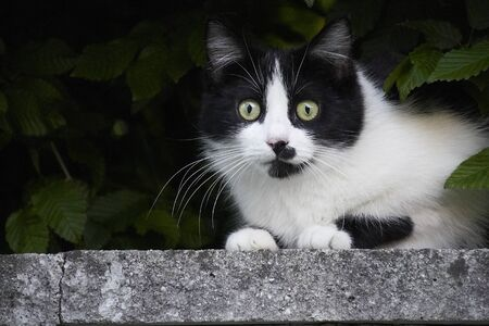 black and white cat on a concrete column Imagens