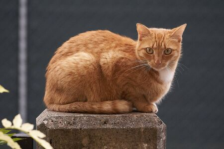 red cat on concrete column Imagens