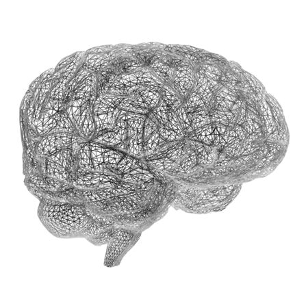 Brain model rendered in wire frame mode