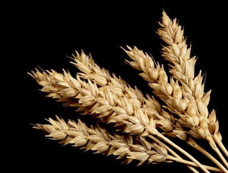 Weizen auf einem schwarzen Hintergrund Lizenzfreie Bilder