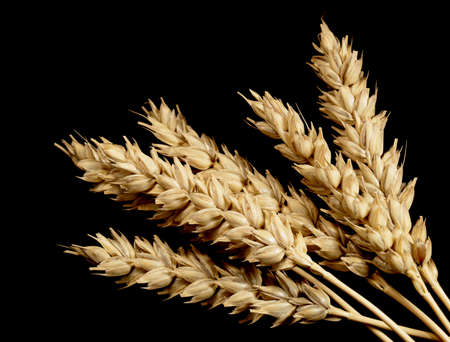Wheat on a black background Imagens