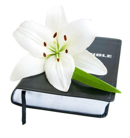 church flower: Pasqua Lily e la Bibbia su uno sfondo bianco Archivio Fotografico