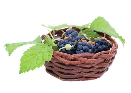 Blackberries in a basket photo