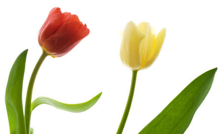 Tulpen Lizenzfreie Bilder