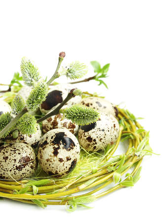 Easter eggs and pussy willow twigs on a white background photo