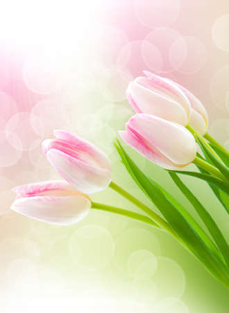 Spring pink tulips with bokeh light in background photo