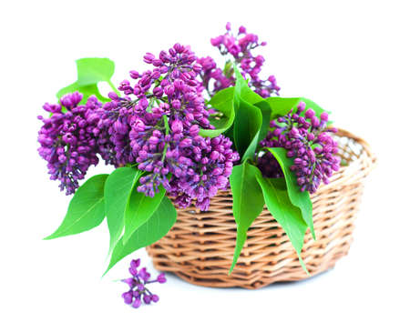 Bouquet of  lilac in a basket on a white background photo