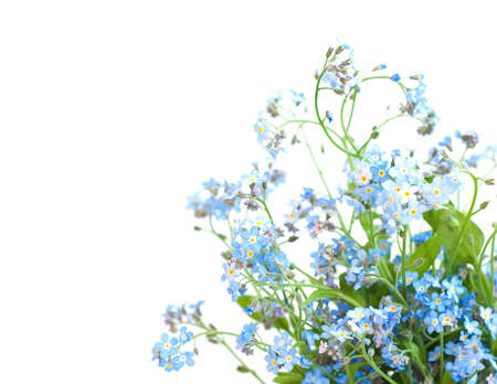 Bunch of forget-me-nots flowers on a white background photo