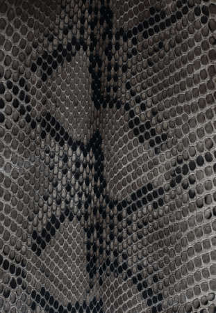 Texture backgroun black and white snake leather photo