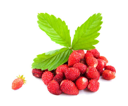 wild strawberry: Wild strawberry with green leaves on a white background