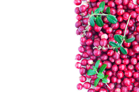 uncultivated: Ripe red wild cranberries on a white  Stock Photo