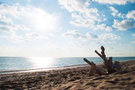 snag: Snag thrown out on coast of Black Sea