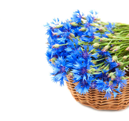 bouquet of blue cornflowers on a  white   background photo