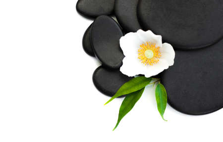 piedras zen: Piedras de spa, pistas de flor sobre un fondo blanco