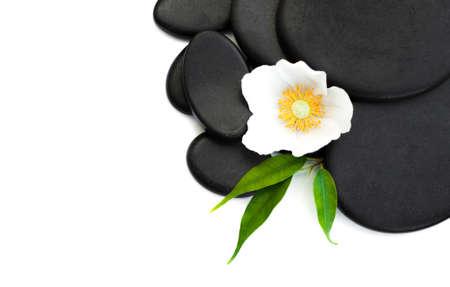 zen stones: Spa stones,  flower heads on a white background