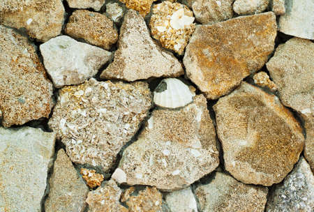 coquina: Muro con coquina - fondo antiguo f�sil